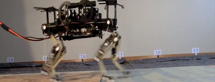 Applying Motion-capture Data From Animals To Quadruped Robots