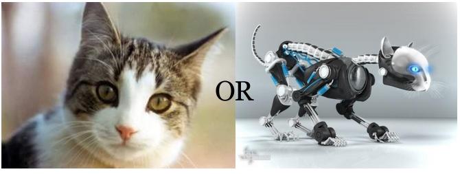 Can a Robot be a Pet? | RoboticsTomorrow