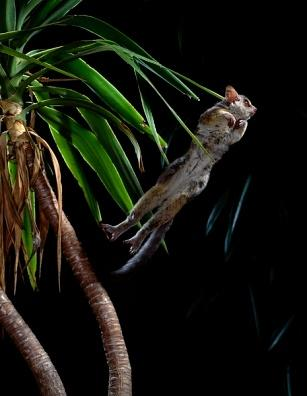 Image result for bush babies jumping
