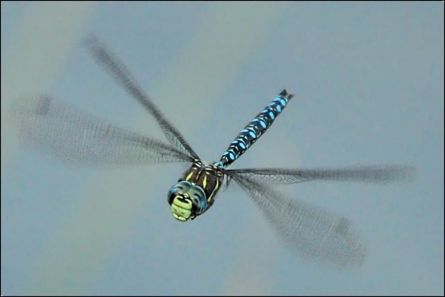 Image result for micro drone wing movement