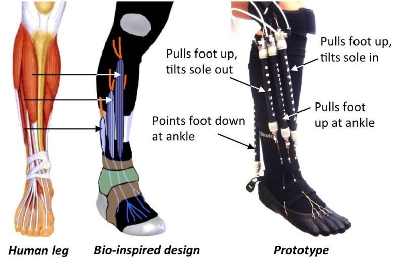 http://www.engineering.com/Portals/0/BlogFiles/DesignerEdge/0114/Bio-Insp1.jpg