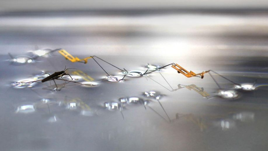 Image result for insect drone that walks on water